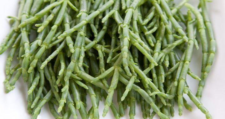 Halophytic Vegetables Being Grown in the UAE