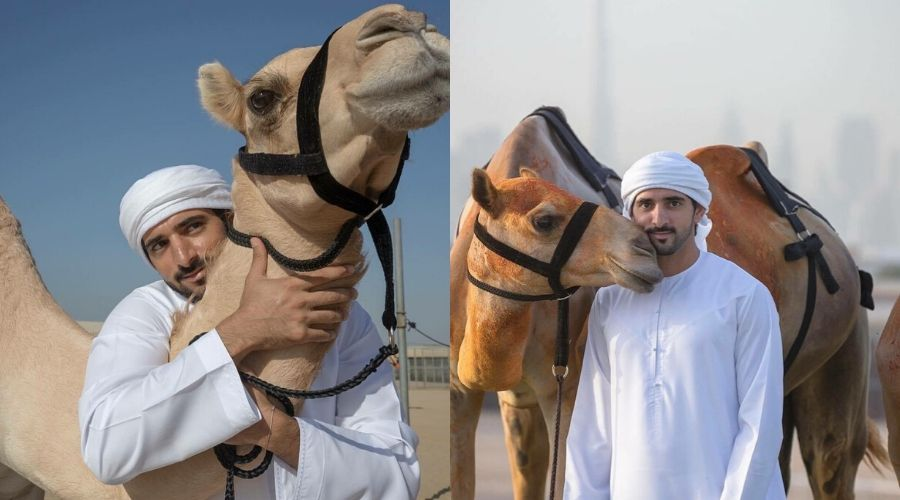 Video: Sheikh Hamdan calling out his Camels with Pet Names - Khaleej Journal